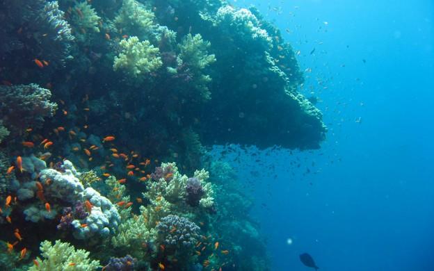 underwaterocean